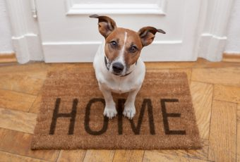 Building Homes For Pets Is The Future Of Real Estate1