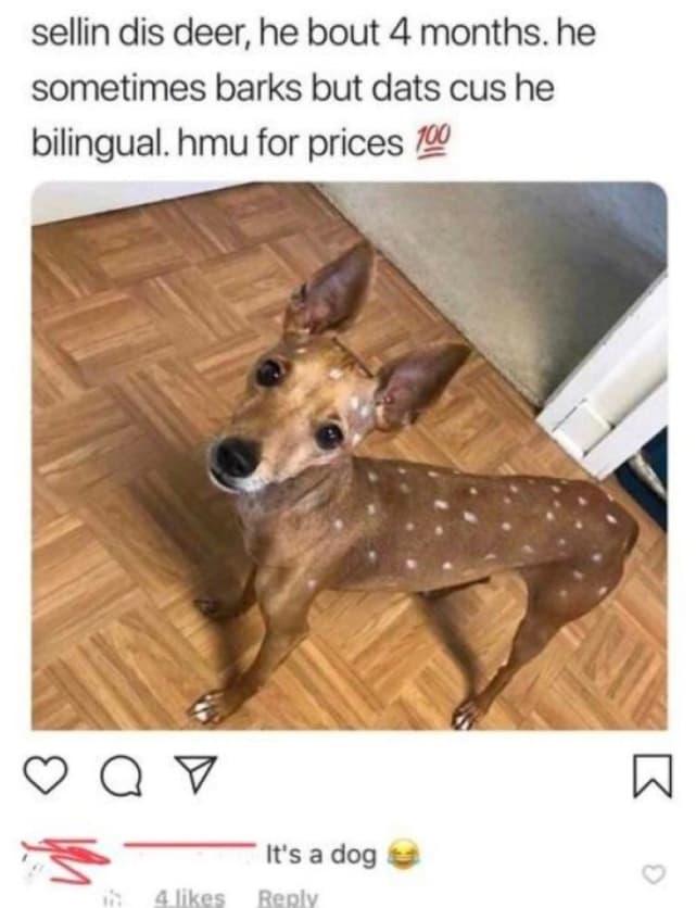 Bilingual Deer