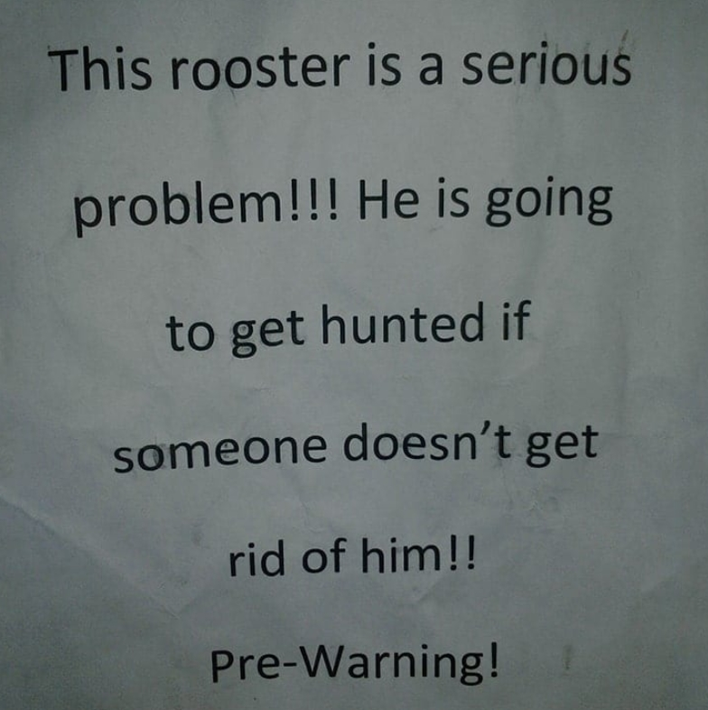Warning For The Rooster