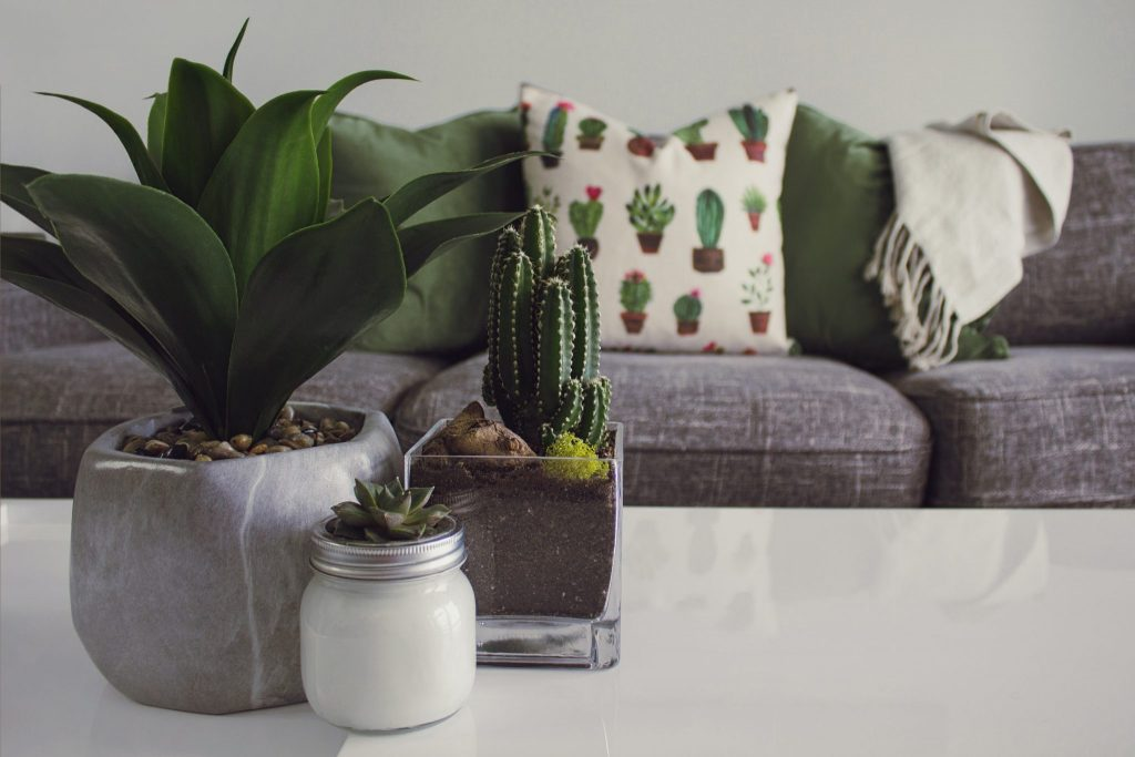The Best Indoor Plants To Have In The House