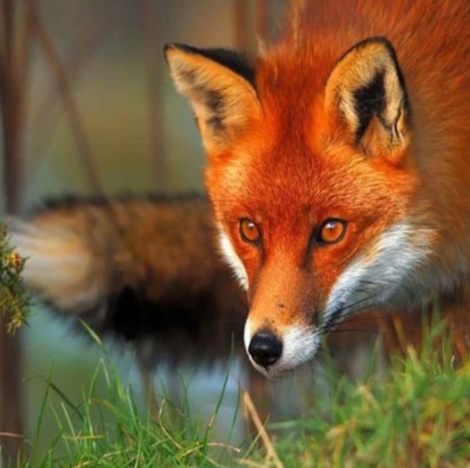 Les Animaux Seuls, Loin De Tout Habitat Sauvage