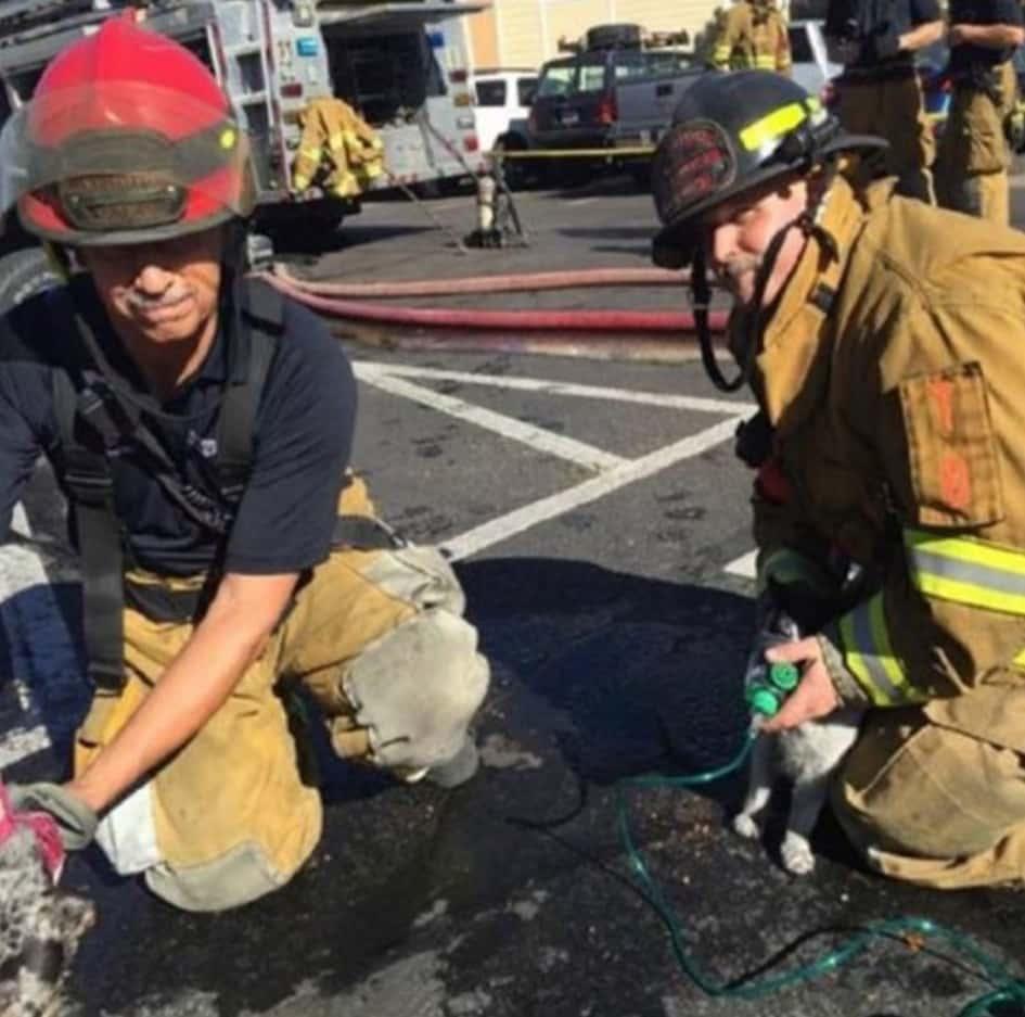 Les Pompiers Ne Se Font Pas De Soucis