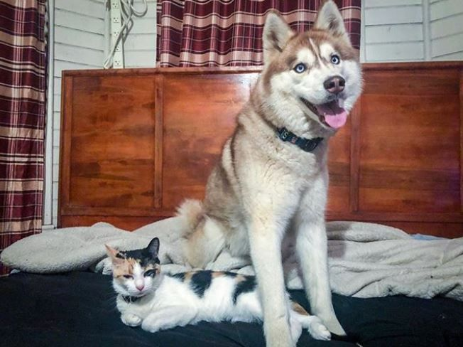 A Kitten Needs A Mother