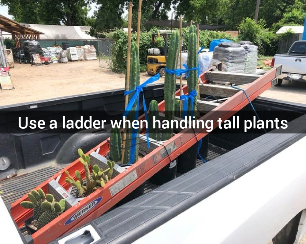 The Ladder Space