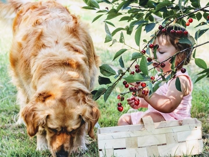 Cherries, Peach Pits, Apple Seeds