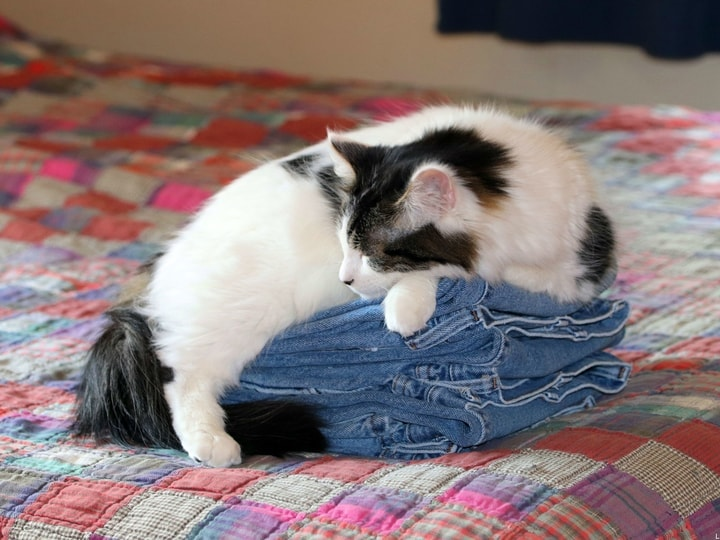 They Sleep On Your Clothes