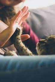 Rub Their Paws Against Your Hands