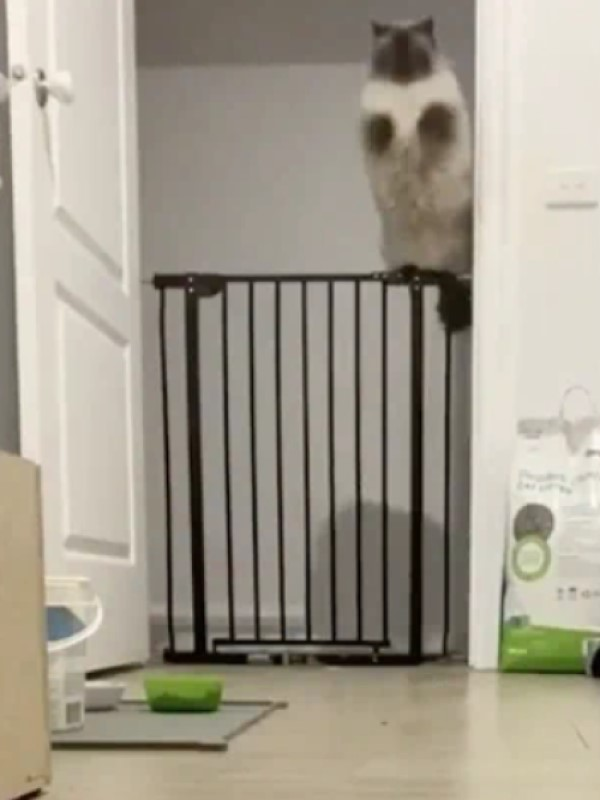 They Jump Around