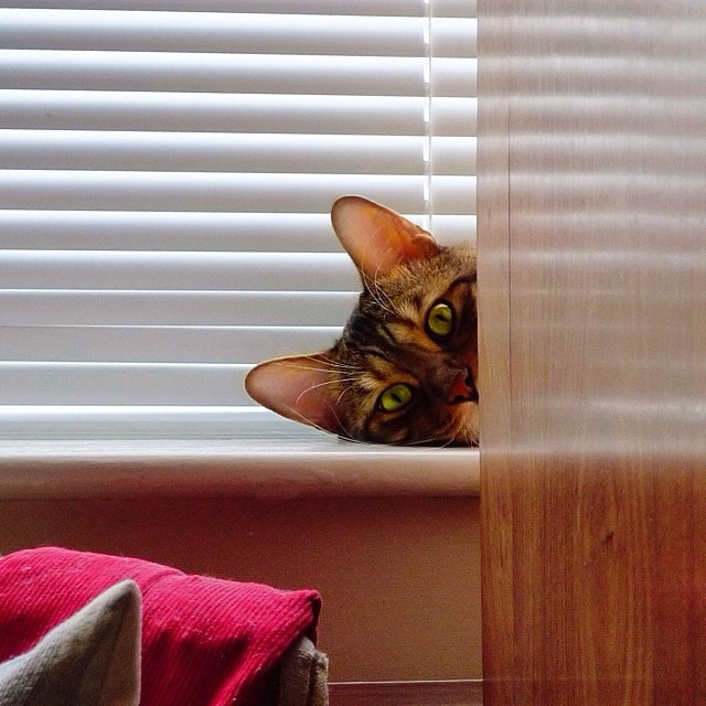 They Spy On You Through The Window